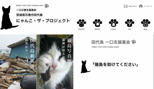 catproject.jpg